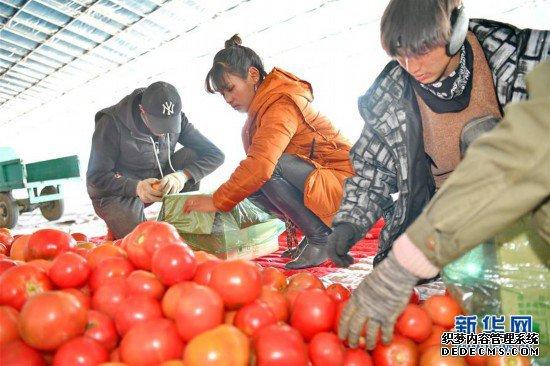 """(新春走基层)(1)西藏白朗:""""菜篮子""""助百姓走上致富路"""